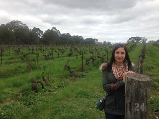 Oldest shiraz vines in the world