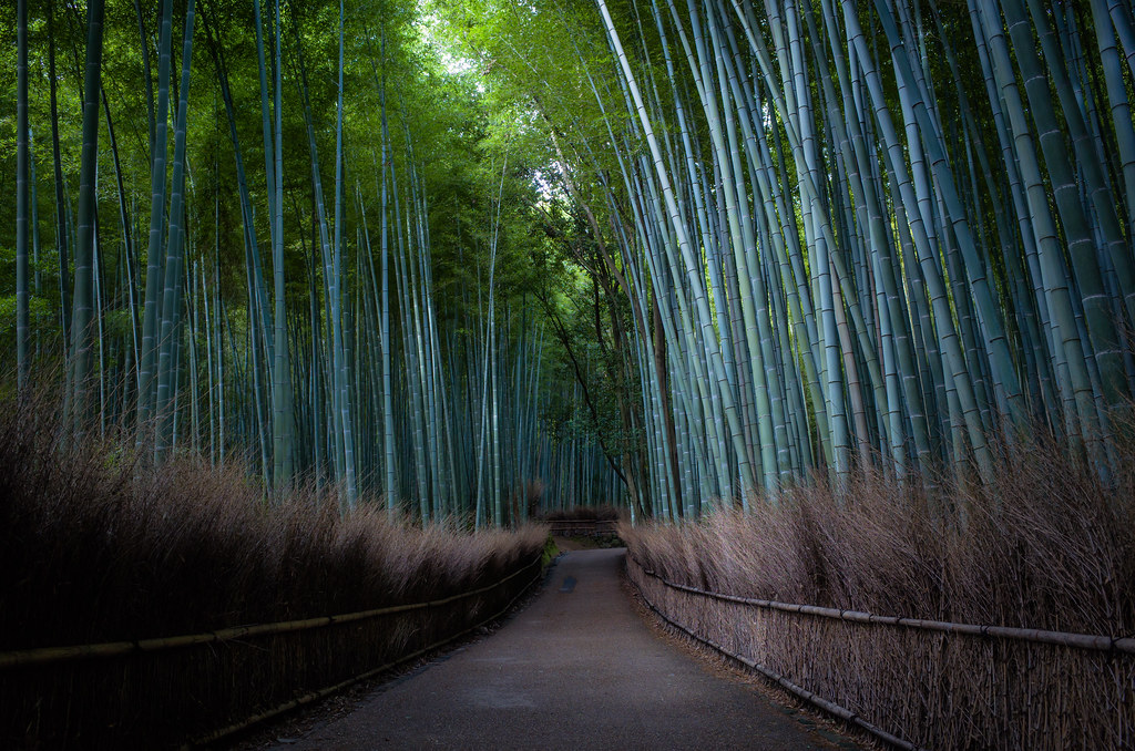 the path of bamboo, revisited #39 (Sagano, Kyoto)
