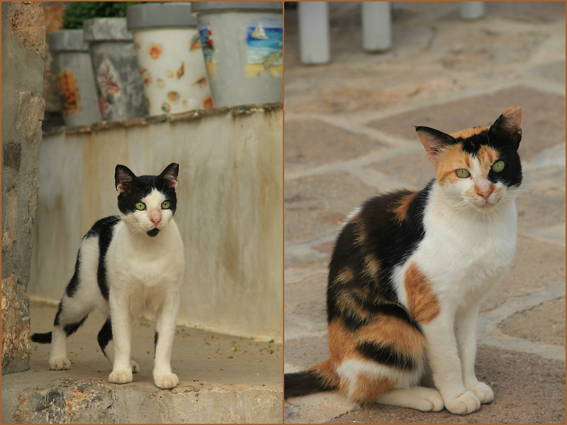 Cats of Hydra
