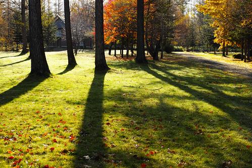 ピルケの森