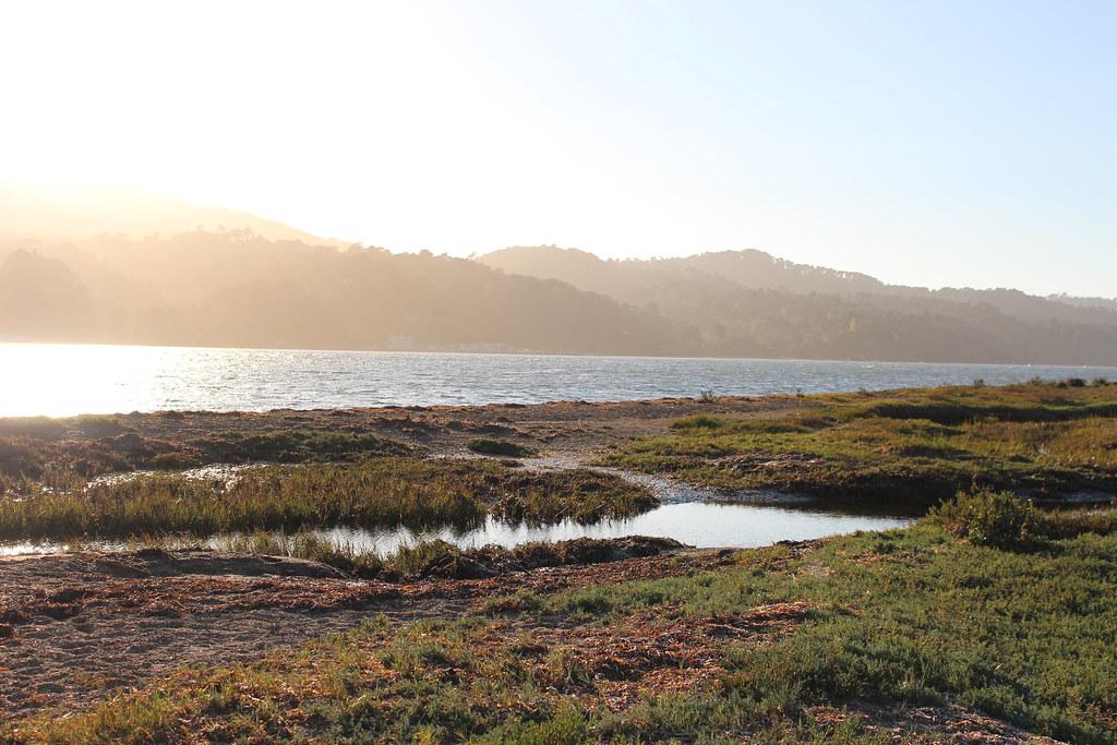 Tomales Bay 2