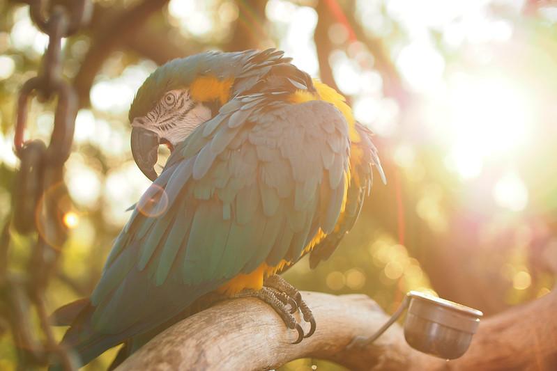 鸚鵡哥|中一光學 25mm f/0.95
