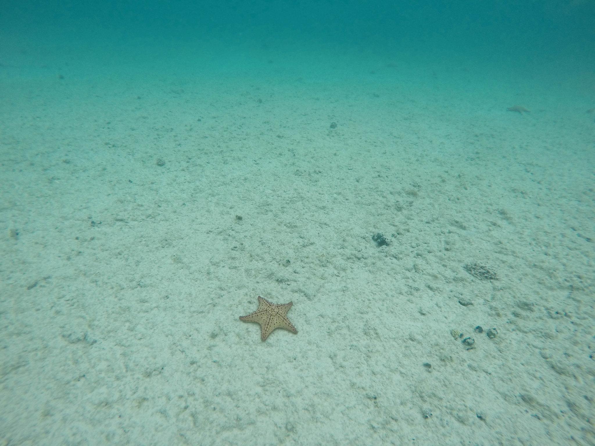Seabob Aruba4