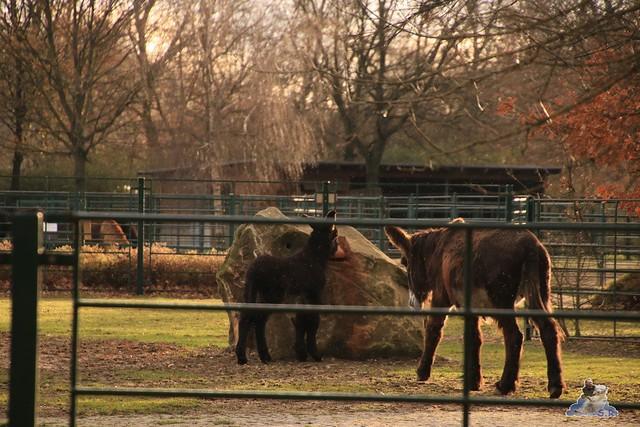 Tierpark Berlin 22.11.2015   0174