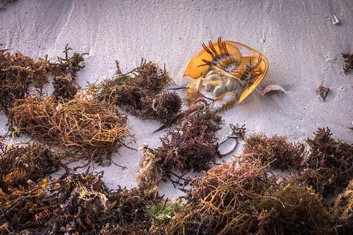 park morning seaweed beach sunrise honda sand state crab bahia horseshoe hdr sandspur
