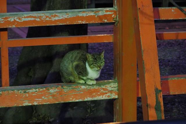 Today's Cat@2017-01-07