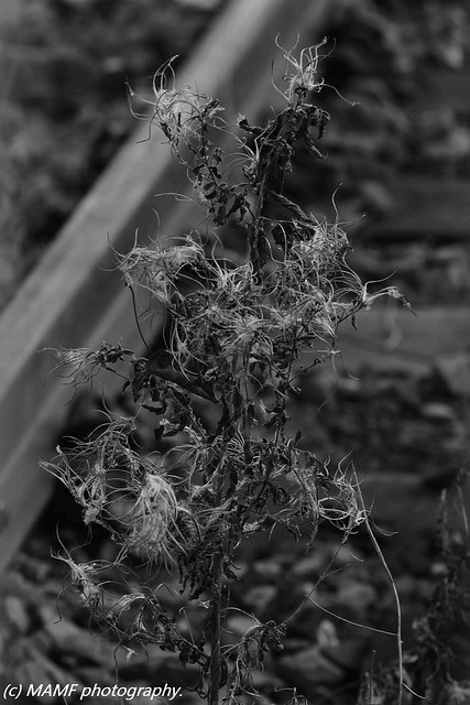 Weeds by the track.