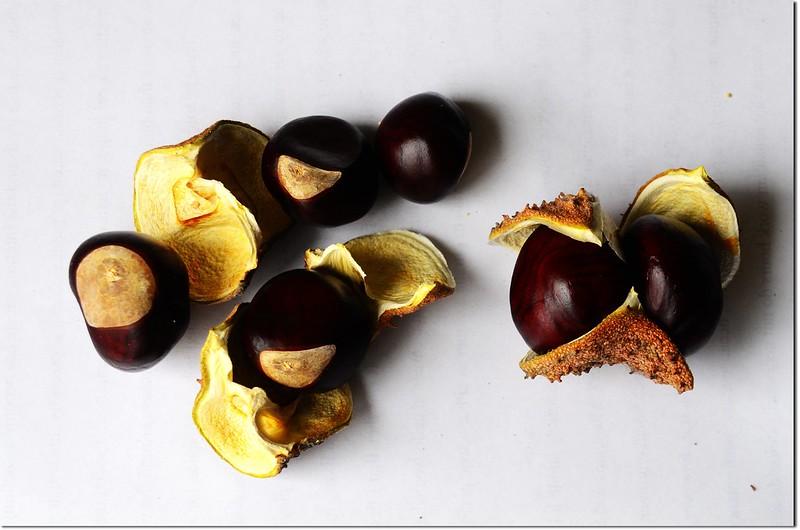 Horse Chestnut(七葉樹)~種子