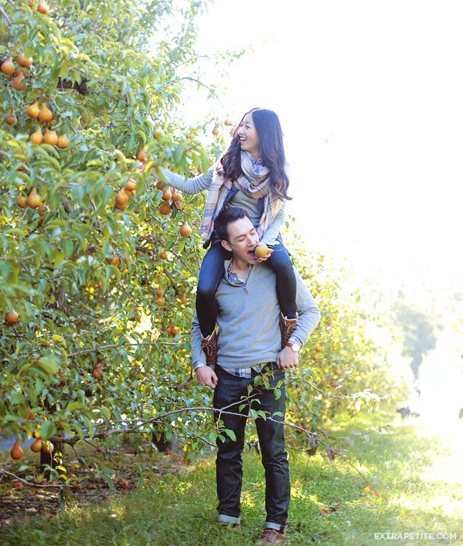 honey pot hill apple pear picking