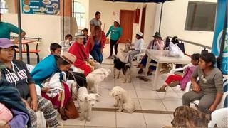 Ecuador dogs