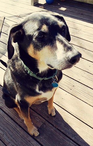 Dog Fall New England Lapdog Creations