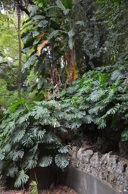 lisboa - jardim botanico