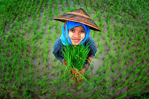 Girl surrounded by rice plants