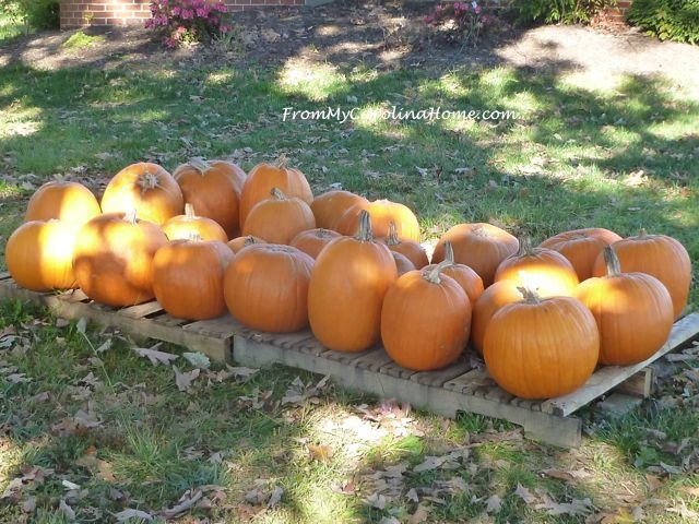 Autumn 2015 at From My Carolina Home