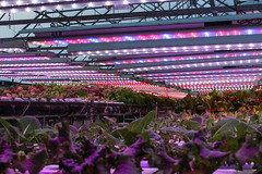 SDWG Chena 2015 - Inside Greenhouses