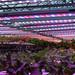 SDWG Chena 2015 - Inside Greenhouses