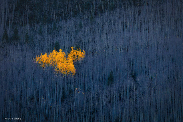 Heart of Aspens