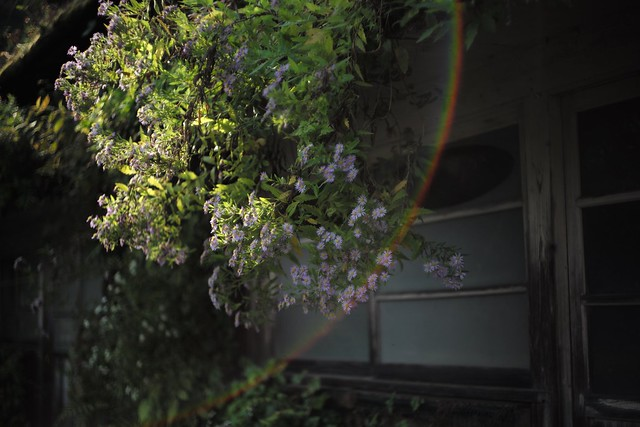 Rainbow Flare