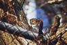 Tree Spy by Hi-Fi Fotos