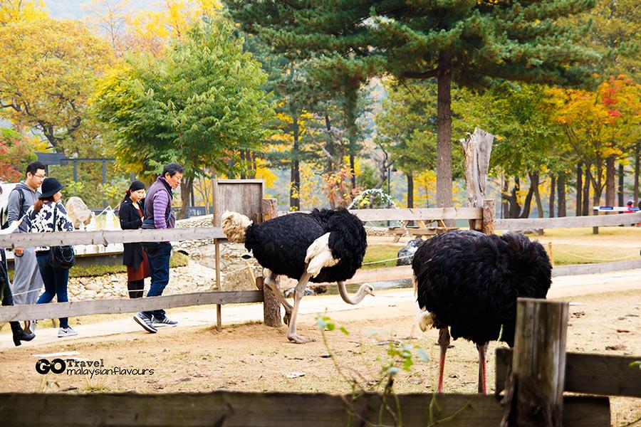 14 things to Do in nami island south korea seoul