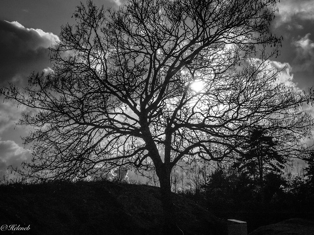 arbre d hiver, Panasonic DMC-GX8, Lumix G X Vario 12-35mm F2.8 Asph. Power OIS