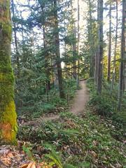 Big Tree Ridge trail