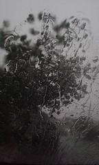 rain-drops-thunderstorm-0409-4