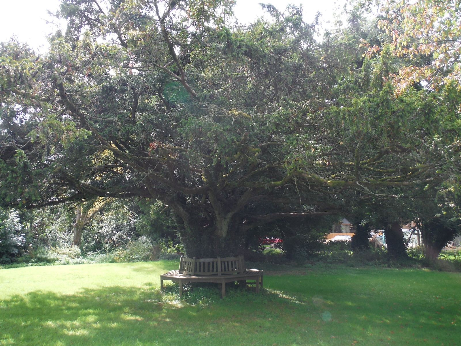 Yew Tree, Swallowcliffe SWC Walk 250 Tisbury Circular via Alvediston