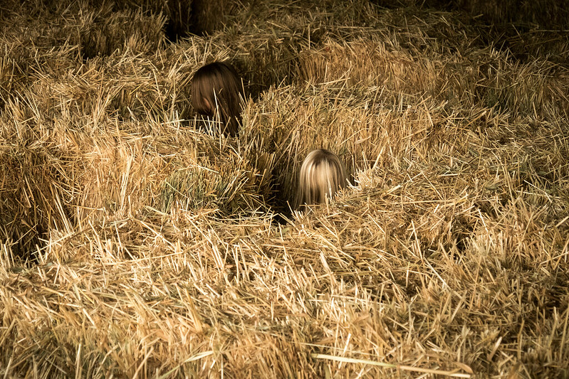 Two in the Hay Maze