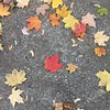 #Redleaf on #concrete - #November in #Oakville #Ontario