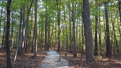 Walking the woods at Umstead State Park.