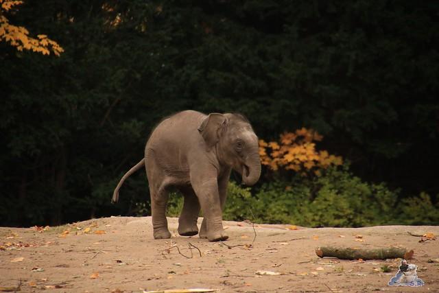 Tierpark Hagenbeck 24.10.2015  052