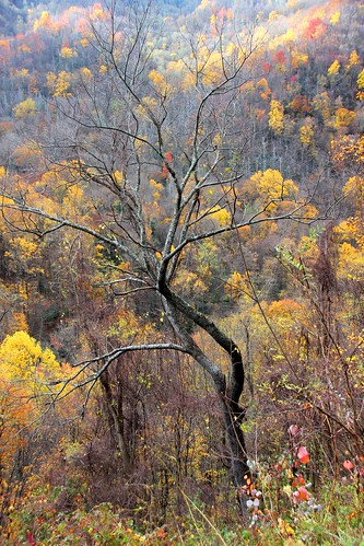 IMG_6695_Tree_at_Chimney_Tops_Overlook