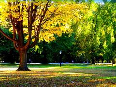 Autumn. West Drive