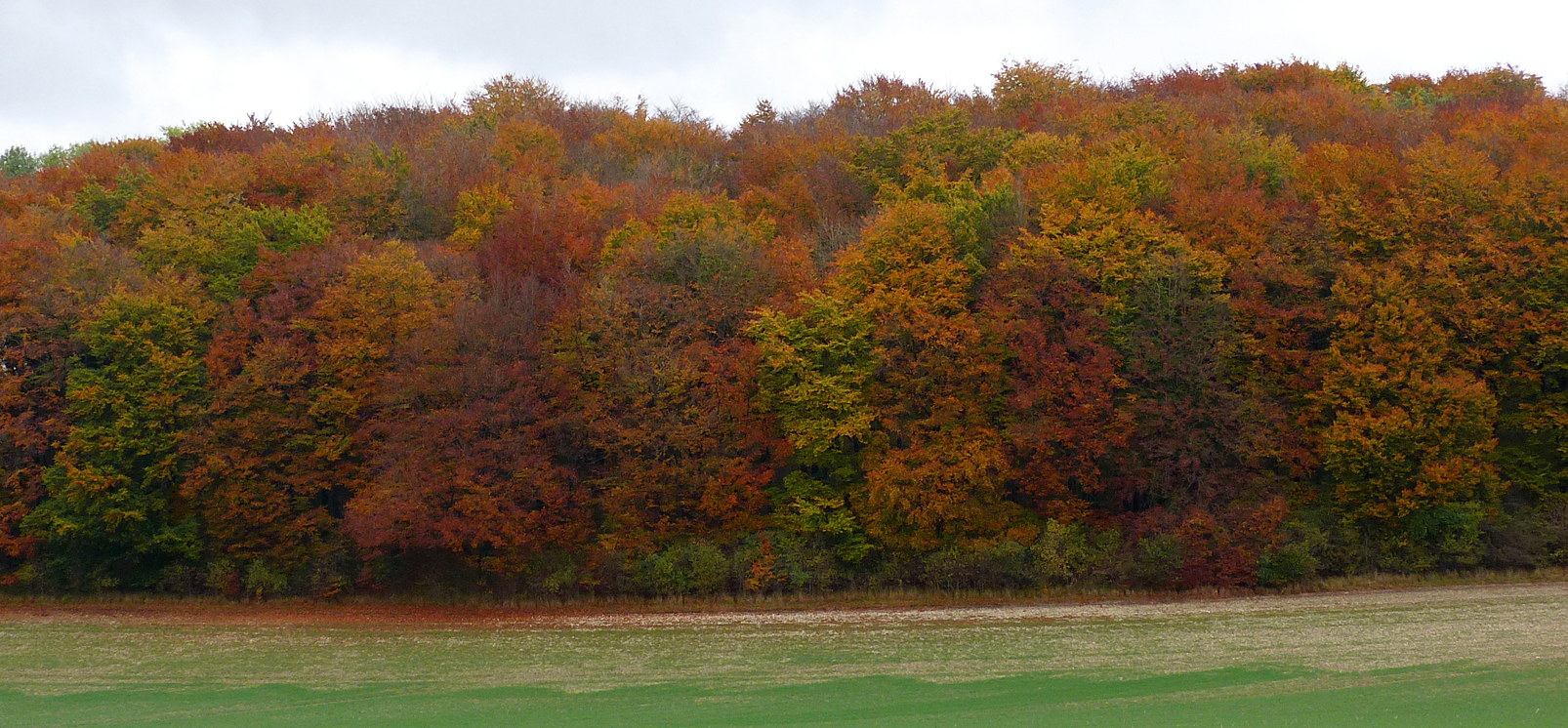 Autumn on the Wolds