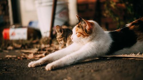 伸びをしてる猫