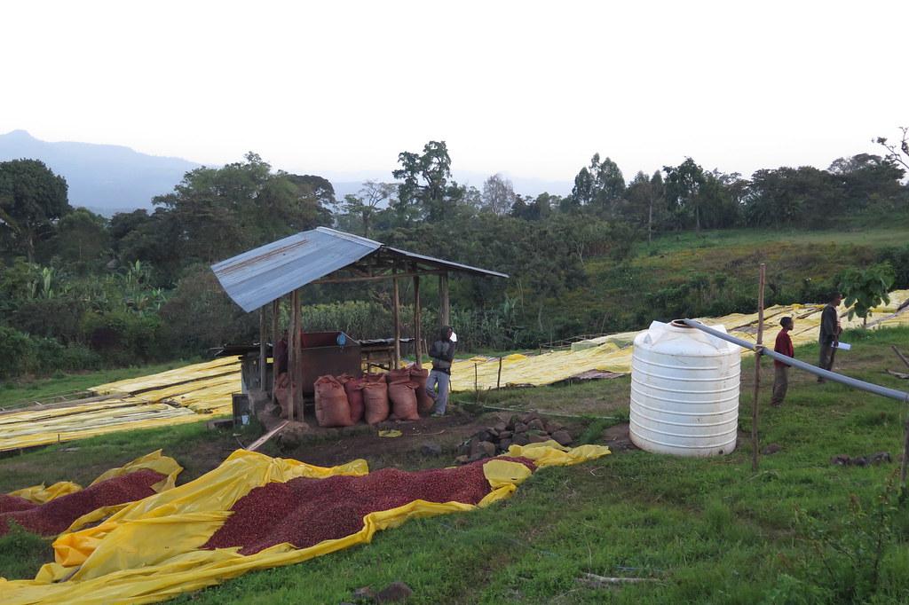 Výsledek obrázku pro etiopie yirgacheffe plantations