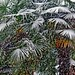 Palm Trees in the Snow - Vancouver, B.C. by HereInVancouver
