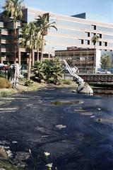 LOS ANGLES California ~ The La Brea Tar Pits ~ Historical Site ~ Whilshire Blvd