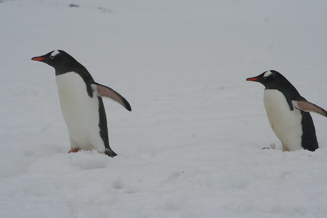 Antarctica 2006 (18)