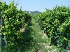 flower(0.0), food(0.0), hedge(0.0), agriculture(1.0), shrub(1.0), tree(1.0), plant(1.0), produce(1.0), fruit(1.0), vineyard(1.0),