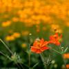 Flowerpowering.. by hajlana