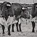 Tarde de toros por Blas Torillo