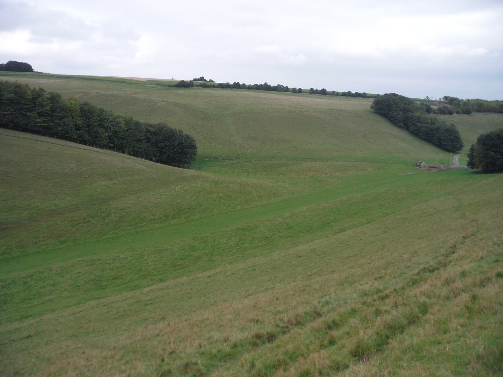 Long Bottom, Prescombe Down NNR, easterly view SWC Walk 250 Tisbury Circular via Alvediston
