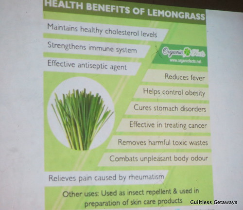 health-benefits-lemongrass.jpg