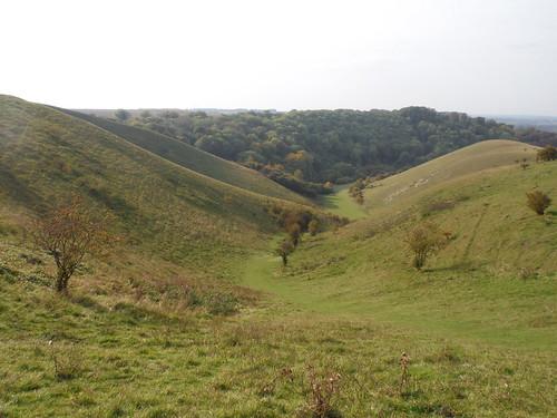 Valley in Barton Hills