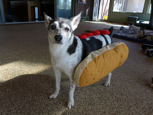2015-10-13 - Peedee Hot Dog - 0006 [flickr]
