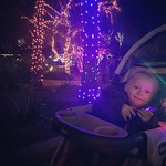 Zoolights with Archer by bartlewife
