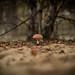 Mushroom by Mister.render