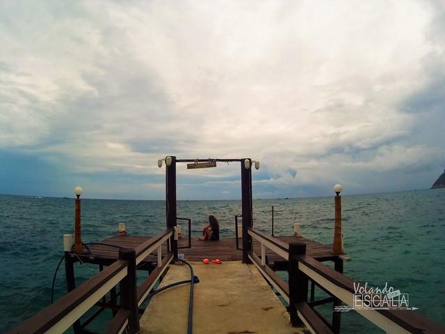 Donde ver tortugas marinas en Koh Tao